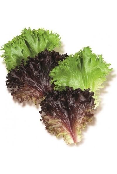 Erüst Tropikal Sepet Çıtır Salata 100 gr