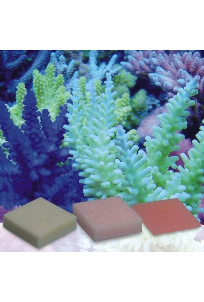 Korallenzucht - Automatic Elements - Potassium Iodide/Fluoride Concentrate 10 Pcs
