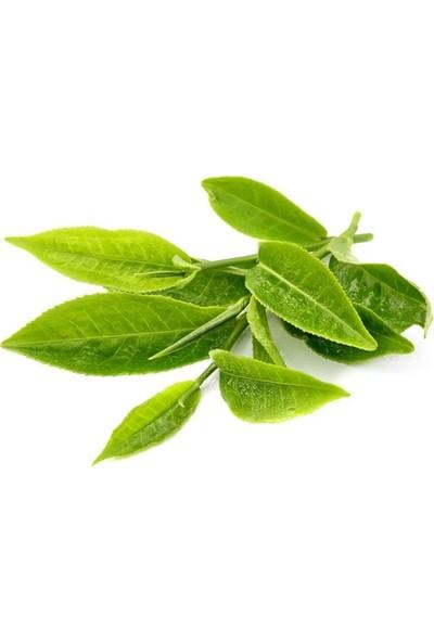 Çam Tohum Japon Yeşil Çay Tohumu 3'lü