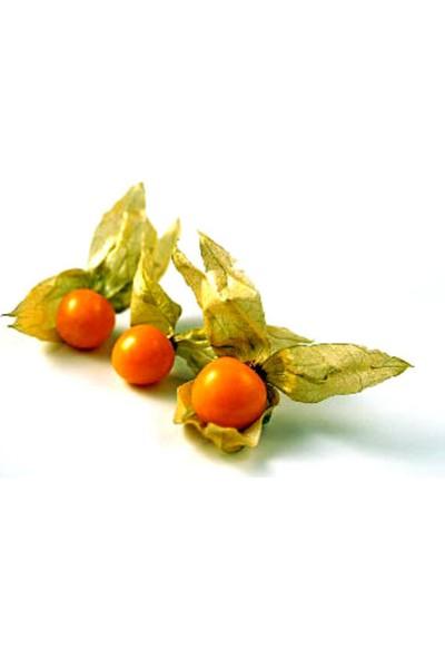 Çam Tohum Altın Çilek Tohumu Kaz Üzümü 5'li