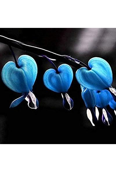Çam Tohum Nadir Mavi Kanayan Kalpler Dicentra Çiçeği Tohumu 5'li