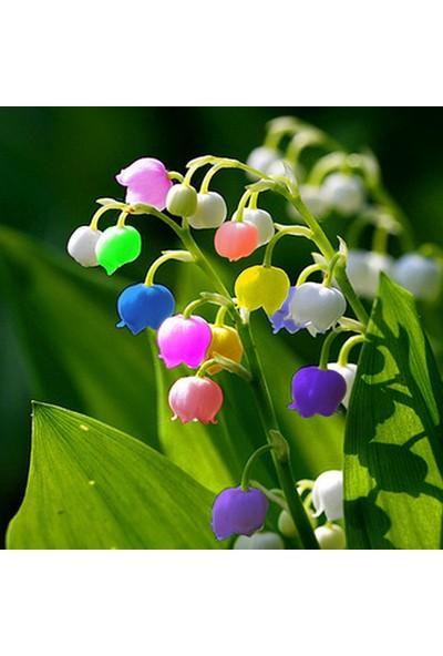 Çam Tohum Nadir Çan Orkide Tohumu 5'li Çiçek Tohumu