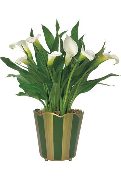 Çam Tohum 7 Farklı Renk Calla Lilly Tohumu 7'li Çiçek Tohumu
