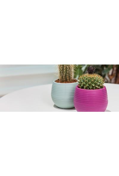 Serinova Amasra-Elvan Bitki ve Kaktüs Saksısı 0.13 lt 6'lı Set