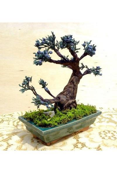Çam Tohum Bodur Blueberry Bonzai Ağacı Ekim Seti 5'li Saksı Toprak Kombin