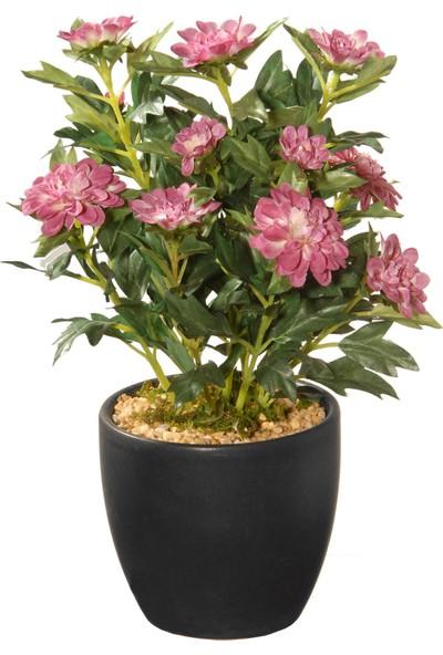 Çam Tohum Karışık Beybeğendi Çiçeği Ekim Seti 5'li Saksı Toprak