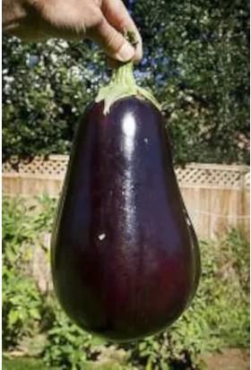 Çam Tohum Nadir Dev İri Patlıcan Tohumu 10'lu