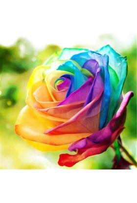 Boothas Nadir Rainbow Gül Tohumu 15'li + Saksı + Torf