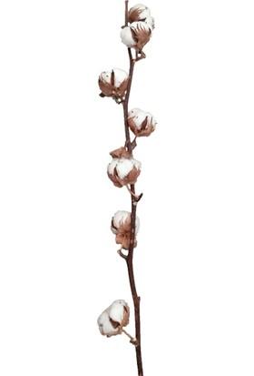 Aden Tasarım Pamuk Dalı Gossypium Spp. Kurutulmuş Bitki
