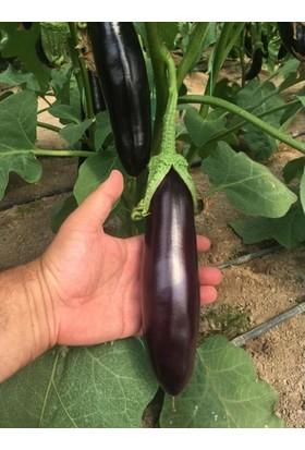 Fide Sepeti Hibrit Patlıcan Tohumu 1 Paket