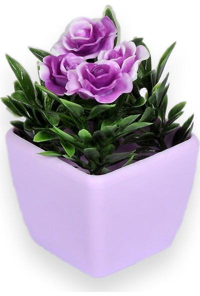 Aşk Evi Renkli Saksı Çiçek