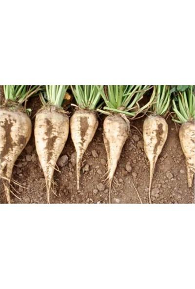 Çam Tohum Beyaz Şeker Pancarı Tohumu 50'li
