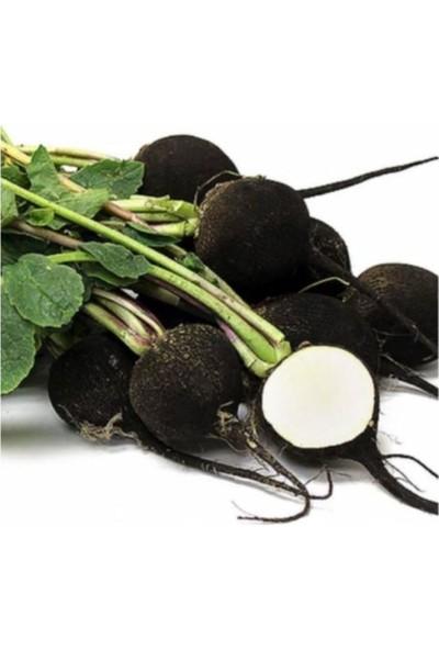 Çam Tohum İri Siyah Turp Tohumu 50'li