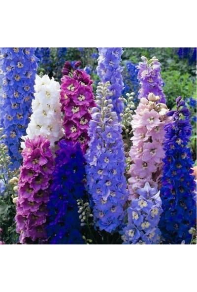 Çam Tohum Karışık Hezaren Çiçeği Tohumu 5'li