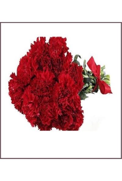 Çam Tohum Kırmızı Karanfil Çiçeği Tohumu 5'li