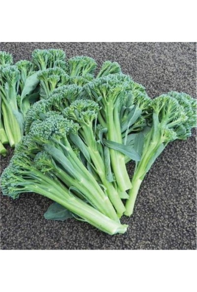 Çam Tohum Nadir Çin Brokoli Tohumu 20'li