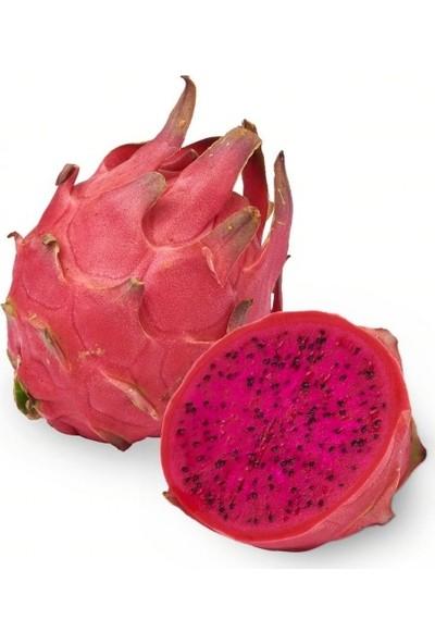 Çam Tohum Tropikal Kırmızı Pitaya Meyvesi Tohumu 10'lu