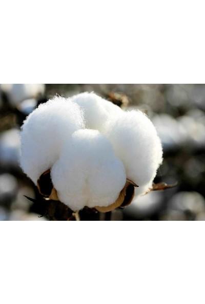 Çam Tohum Beyaz Pamuk Tohumu 10'lu