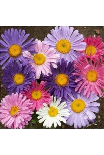 Çam Tohum Karışık Dilber Kipriği Çiçeği Ekim Seti 5'li
