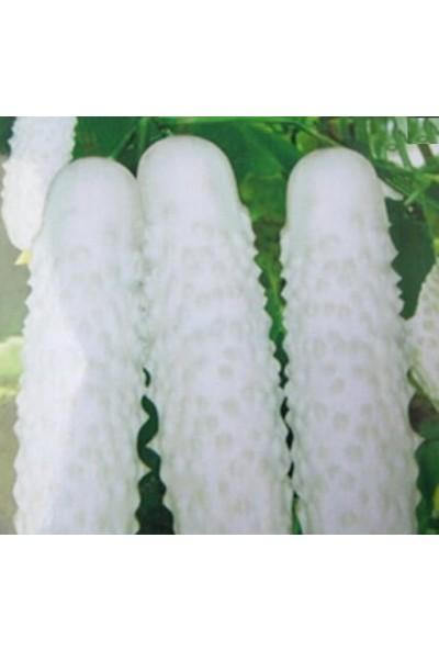 Çam Tohum Nadir Beyaz Salatalık Tohumu 5'li