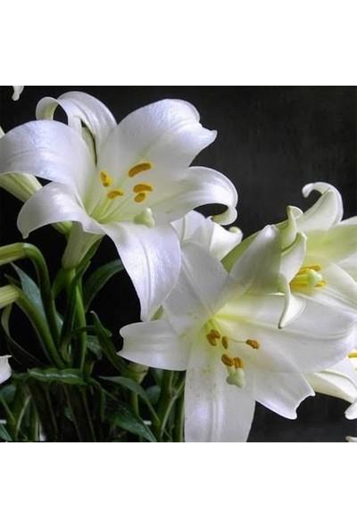 Boothas Lilyum Çiçeği Tohumu 15'li + Saksı + Torf