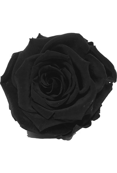 Minia Bahçe Solmayan Gül Siyah