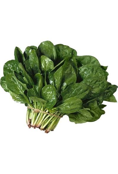 Ege Tarım Ithal Ispanak Tohumu 50 gr