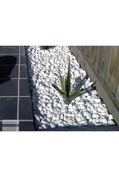 Ekodoğa Beyaz Dolomit Taşı 10 kg 2,5 - 4 cm Bahçe Taşı Dekoratif Taş Dere Taşı Dolomite Doğal Taş Beyaz Süs Taşları