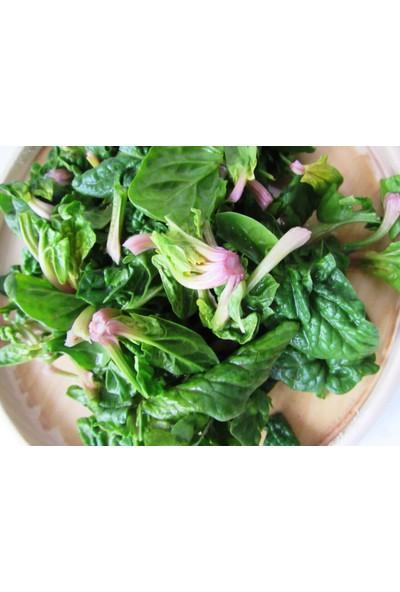 Chef's Garden Tropikal Sepet - Kök Ispanak 500 gr
