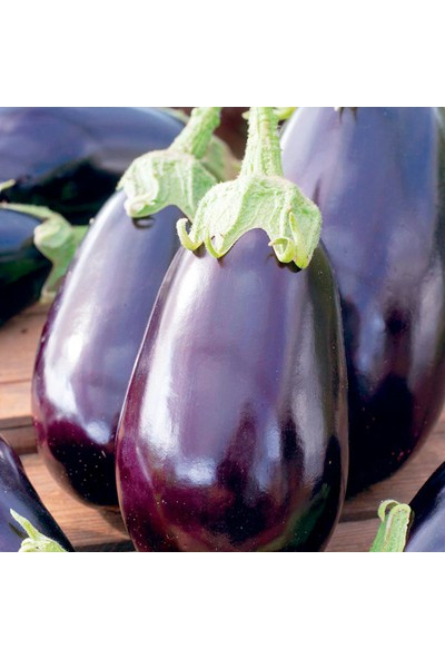 Çam Tohum Dev Iri Dolmalık Patlıcan Tohumu 200'lü