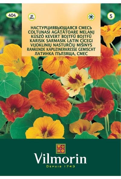 Vilmorin Sarmaşık Latin Çiçeği Kapuçin Tohumu