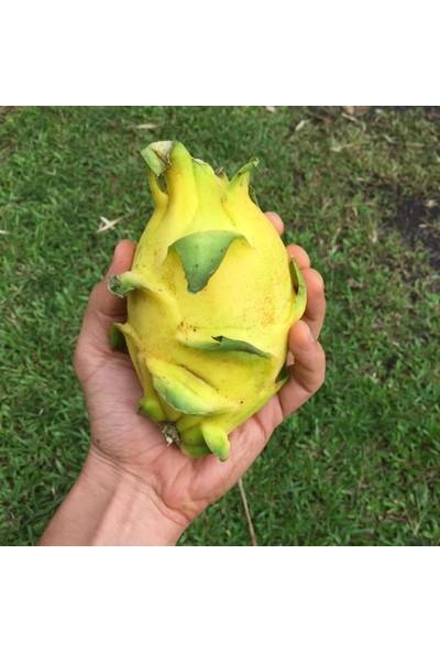 Tohhum Sarı Ejder Meyvesi Tohumu 10'lu