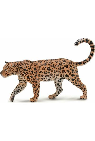 Collecta Africa Leoparı