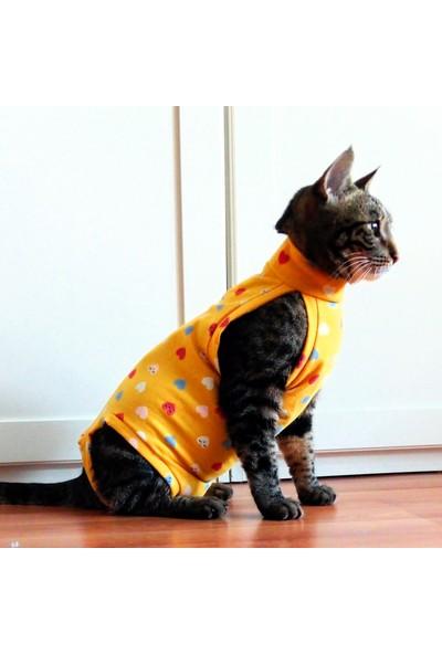 Stylie Kedi Ameliyat Sonrası Giysisi L
