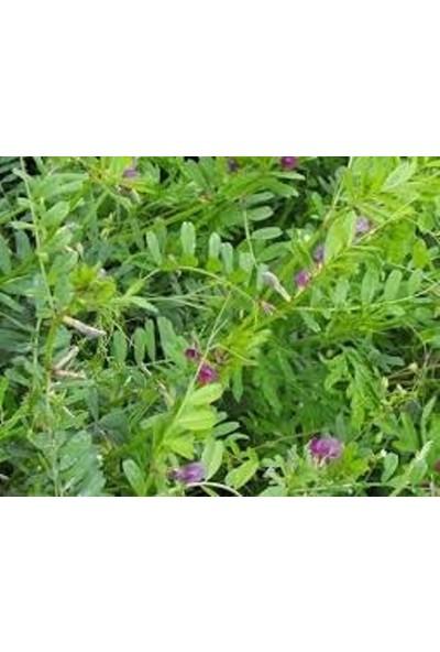 EKODOĞA Adi Fiğ Tohumu 5 KG Adi Fiğ Yem Bitkisi Tohumu Fiğ Tohumu Yem Bitkileri Tohumları