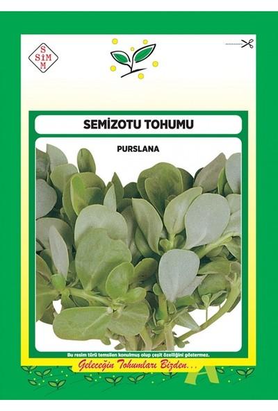 Ekodoğa Semizotu Tohumu 1 Paket Sebze Tohumu Semiz Tohumu Sebze Tohumları Semiz Otu Tohumu