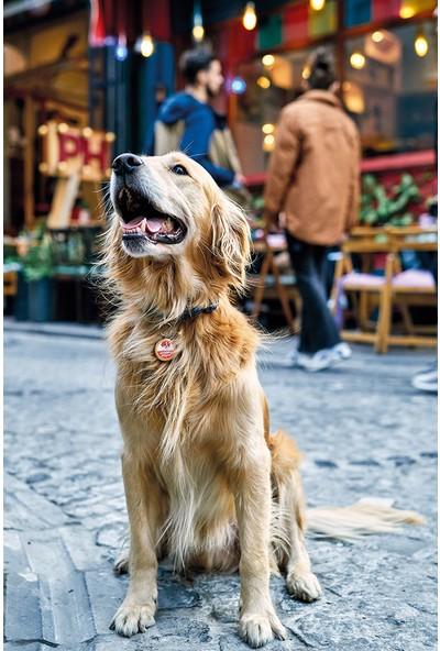 Smart Magnet Sahibimi Ara Köpek Kolyesi Ömür Boyu Kullanım