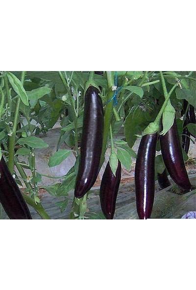 Çam Tohum Nadir Diyarbakır Kemer Patlıcan Tohumu Süper Paket 200 Tohum