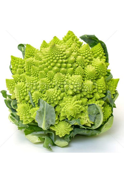 Çam Tohum Nadir Piramit Brokoli Tohumu 10 Tohum