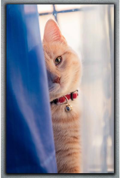 Mimiyum Kedi Kanvas Tablo 50 x 70 cm