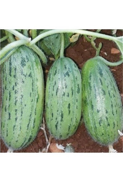 Çam Tohum Nadir Badem Çin Acur Tohumu Süper Paket 200 Tohum