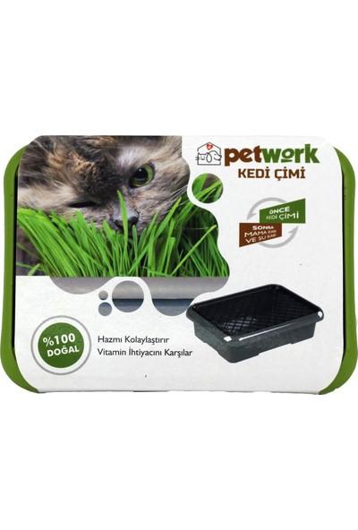 Petwork Kedi Çimi Yeşil