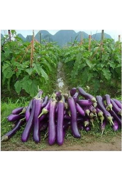 Çam Tohum Dev Uzun Kemer Patlıcan Tohumu 100'lü