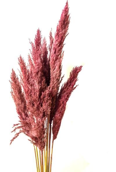 Fekare Kuru Çiçek Pampas Otu 10'lu Demet Burgonya 100 cm