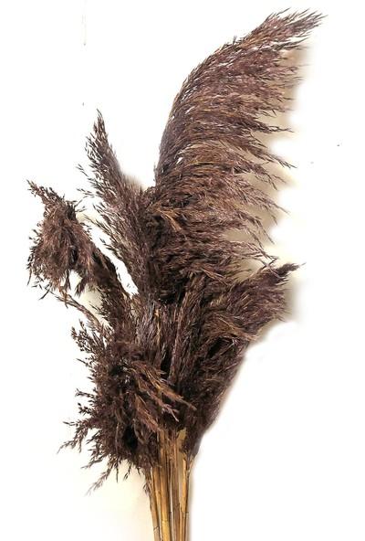 Fekare Kuru Çiçek Pampas Otu 10'lu Demet Kahverengi 100 cm
