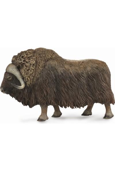Collecta Misk Sığırı