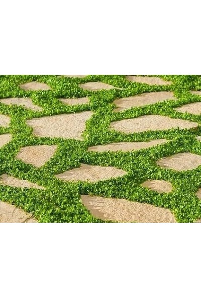 Ekodoğa Fare Kulağı Tohumu 250 gr Dichondra Repens Kundura Çimi Yayılıcı Çim Tohumu Fare Kulağı Çim Tohumu