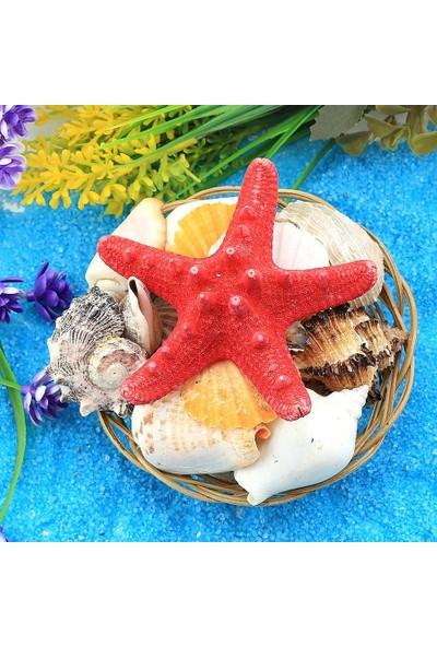 Mavitasarım Dekoratif Deniz Kabuğu Sepeti Çap 10 cm