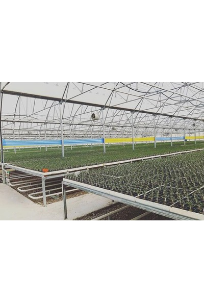 Biogreen 15 x 100 Mavi Yapışkan Rulo Tuzak