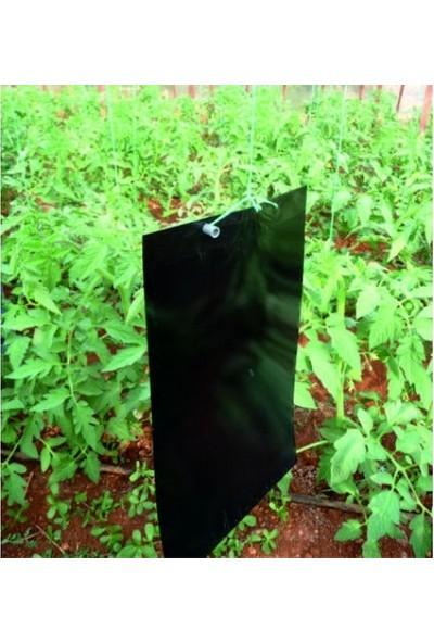 Biogreen 25 x 40 Siyah Kart Tuzak